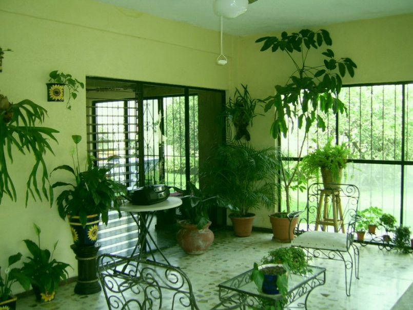 افكار من ديكورات النباتات لتخفيف الحرارة داخل المنزل