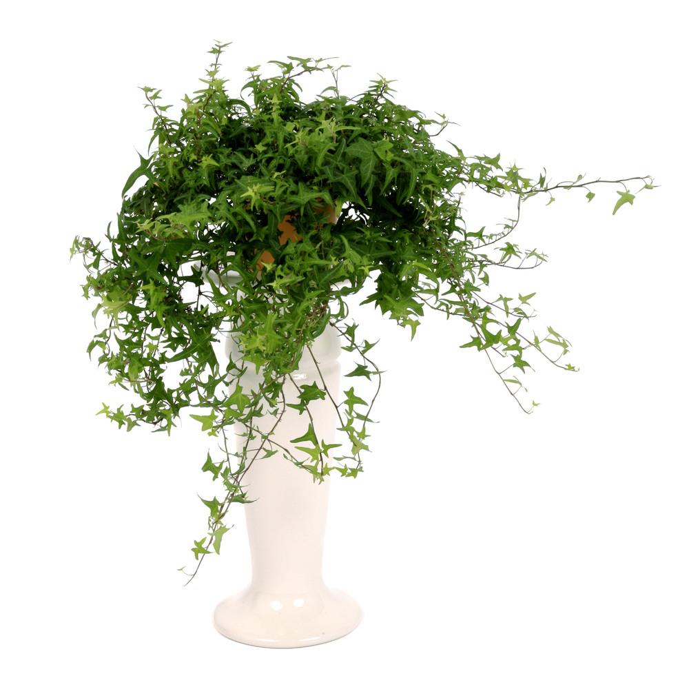 افكار من لديكورات النباتات لتخفيف الحرارة داخل المنزل