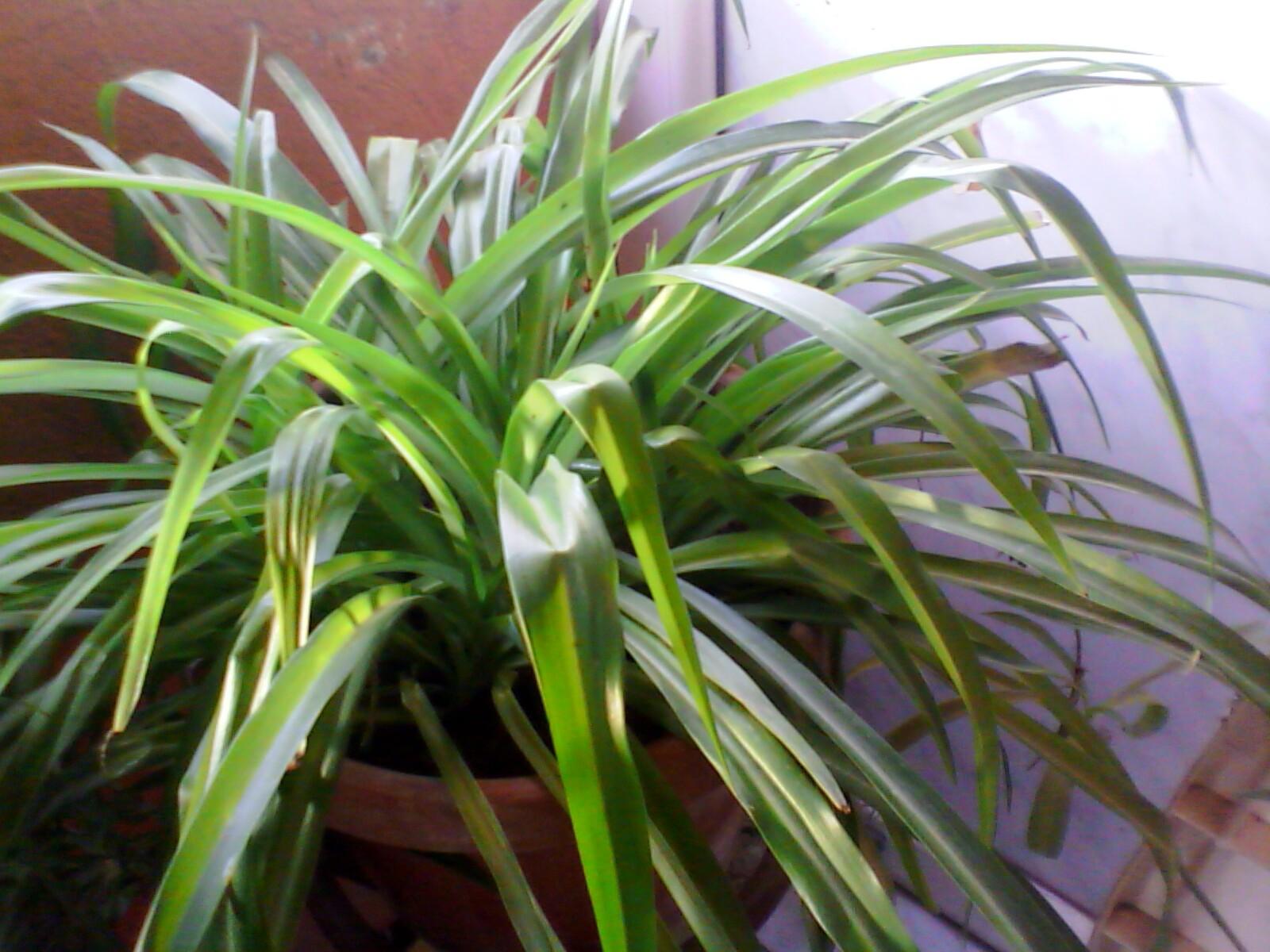 صور لديكورات النباتات في المنزل