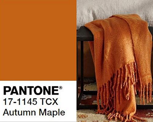 لون شجر الخريف Autum Maple