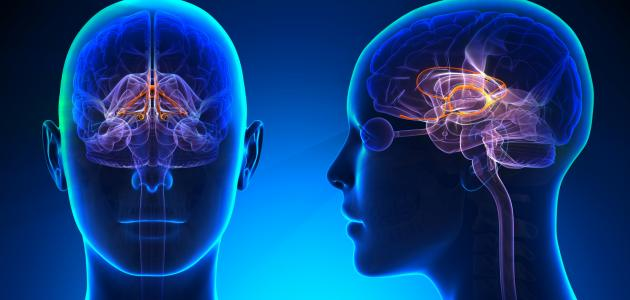 علاج امراض الجهاز العصبي